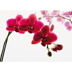 Orchidee Fotobehang (Wallpaper)