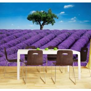 Fotobehang Lavendel (366 x 254 cm)