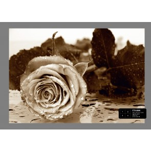Violet Black & White Rose Fotobehang 4D (AG Design)